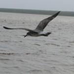 gaivota quatro