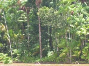 Biodiversidade Amapa